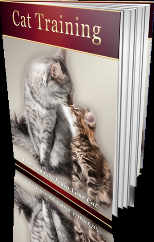 Product picture How You Can Train Your Cat